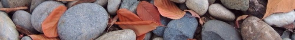 목수의 졸개